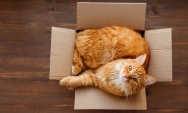 8 façons de réutiliser vos emballages au profit des animaux