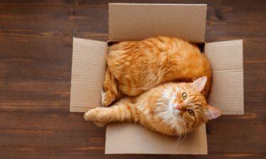 8 x verpakkingen upcyclen voor je huisdieren